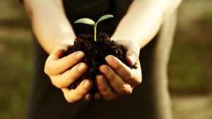 Female hand holding a young plant with soil